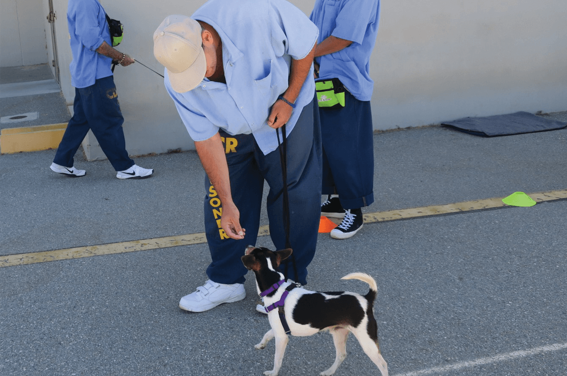 Prisoners rehabilitating with Ruff Start program