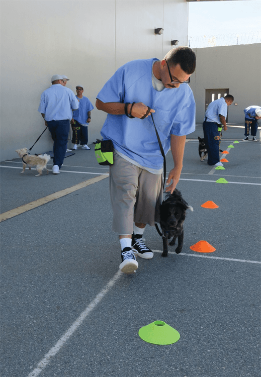 Inmates walking dogs on the yard