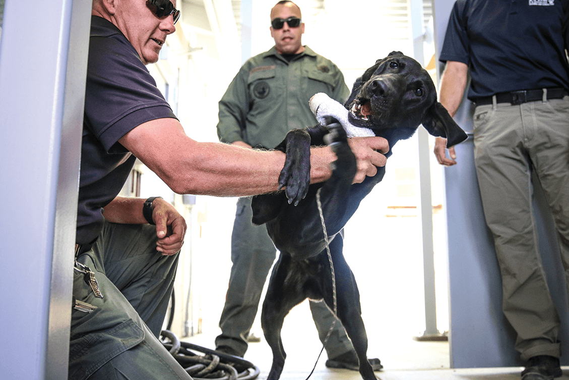 K-9 trainer and Investigative Services Unit officers