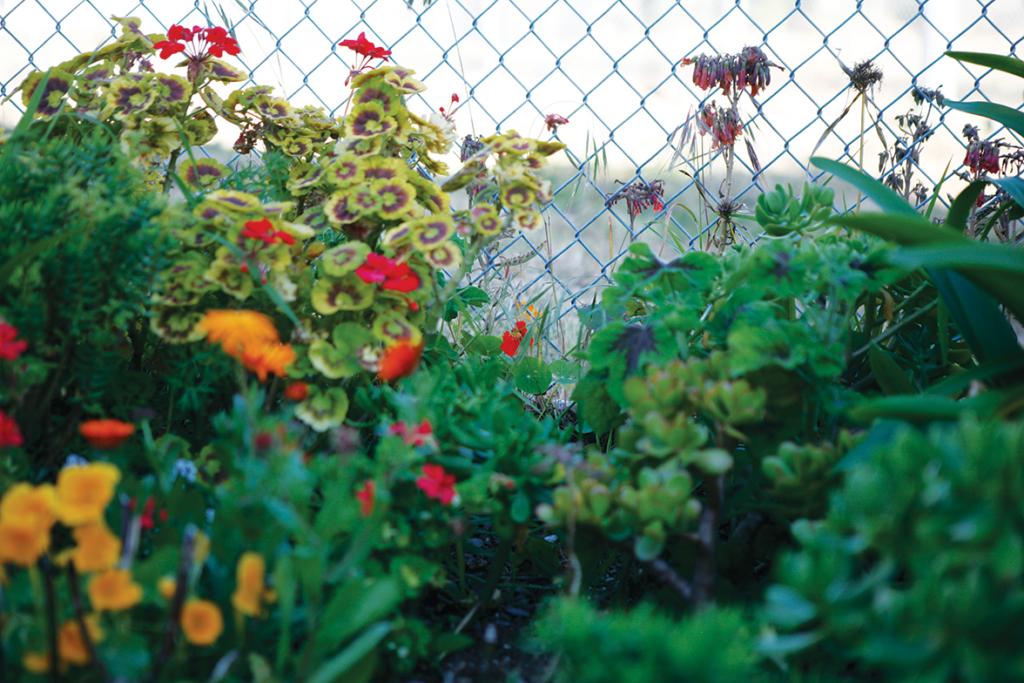Diferente clases de flores plantadas por Leopoldo Zaragoza